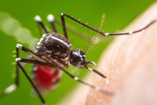 Che tipo di malattie trasmettono le zanzare?