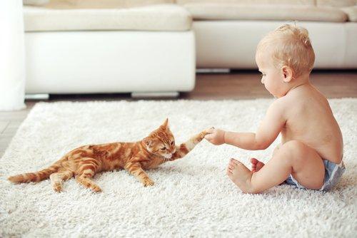 neonato gioca col gatto su un tappeto bianco
