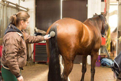 padrona pulisce la coda di un cavallo