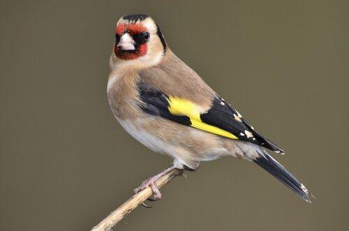 5 uccelli che cantano di pi i miei animali - Primavera uccelli primavera colorazione pagine ...