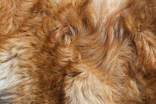 pelo del cane