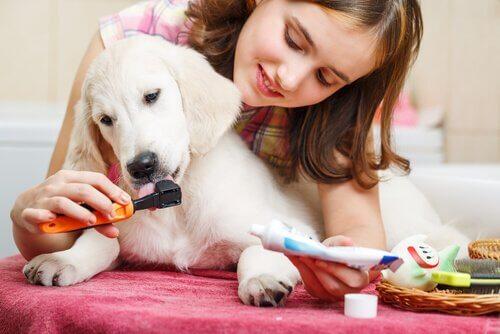 ragazza spazzola denti al suo cucciolo di cane