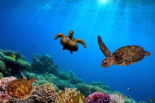 7 destinazioni per vedere animali selvatici in libertà