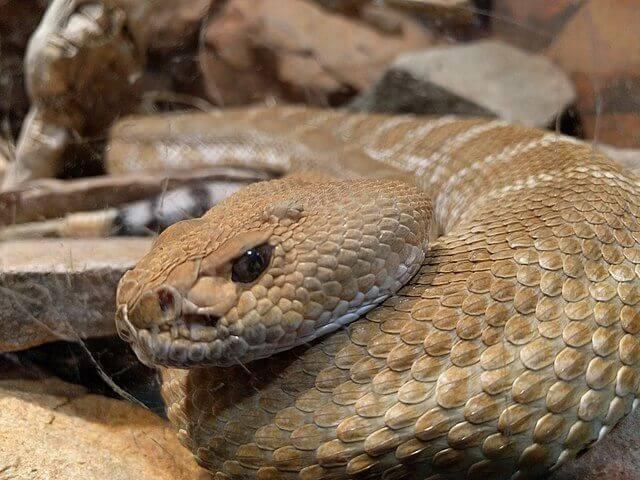 Problemi tipici con la muta dei serpenti