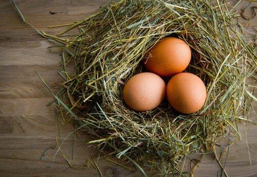 Uova di gallina: i segreti per migliorare la qualità