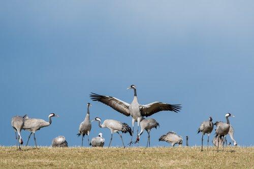 6 uccelli migratori che dovete conoscere