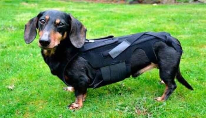 Tipi di ernie nei cani
