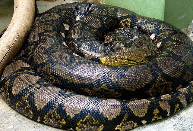 Un serpente arrotolato su se stesso