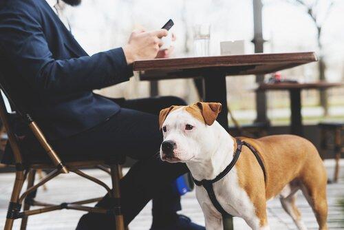 cane e padrone seduto al bar