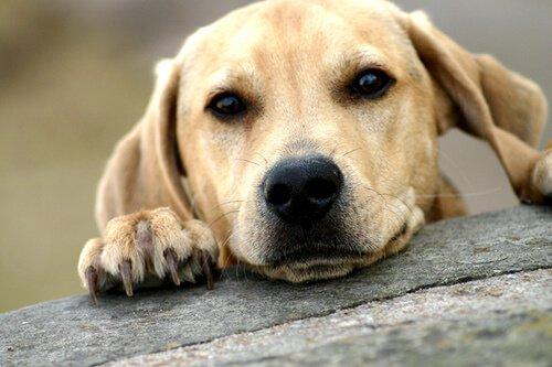 un cagnolino con la testa e la zampa appoggiate su una tavola