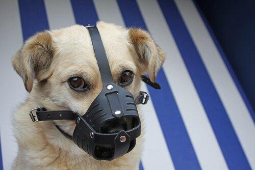 Cagnolino con una museruola di protezione
