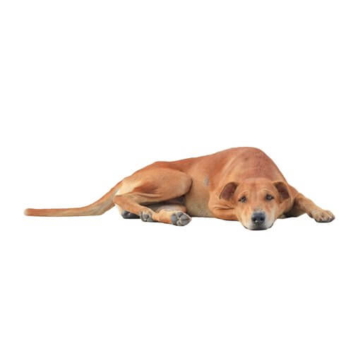 cane sdraiato per terra