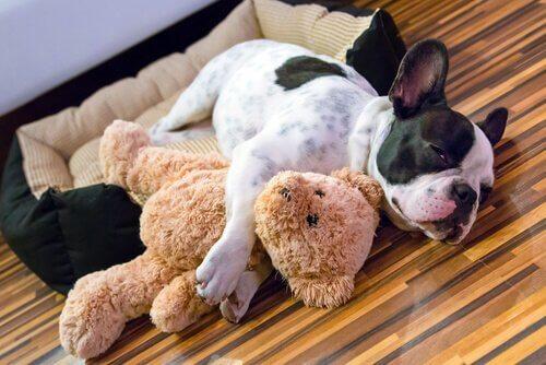 un cagnolino sdraiato vicino ad un peluche