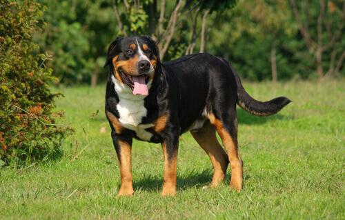 Cane adulto in giardino