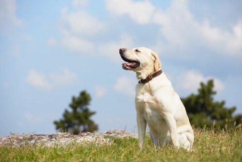 un cane bianco seduto all'aria aperta