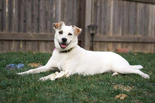 cane bianco sdraiato sul prato