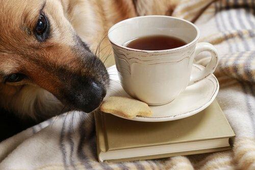 Trucchi per evitare che il cane rubi il cibo