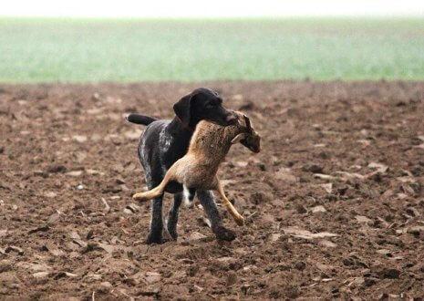 Il vostro cane è un buon cacciatore?