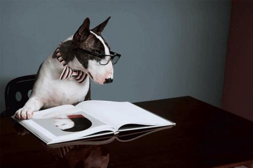 Neville, il cane di Marc Jacobs, diventa scrittore