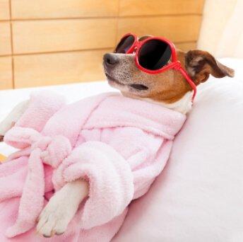 un cane con occhiali e accappatoio nell'hotel di lusso per cani