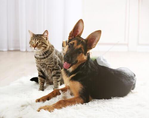 un cane e gatto sdraiati insieme su un tappeto lanoso