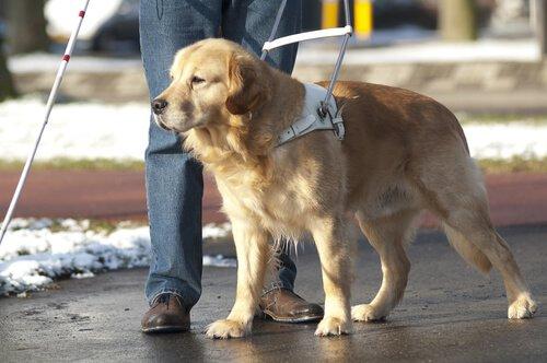Cane guida aiuta una persona a camminare in strada