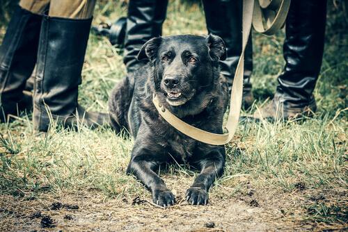I cani nella Seconda Guerra Mondiale