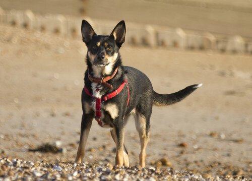 un cane in piedi sulla terra con imbracatura per cani