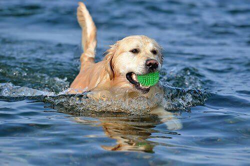 Insegnate al cane a giocare a palla senza ansia