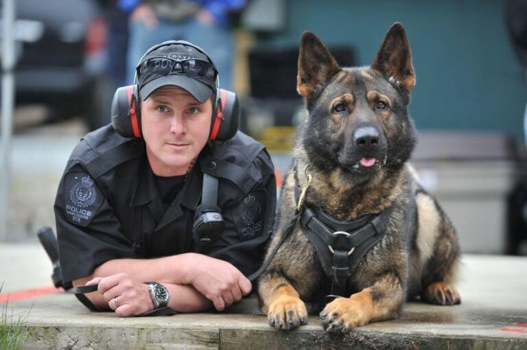 Cane poliziotto accanto a un agente