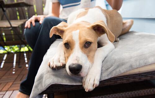 un cane riposa steso sul letto col suo padrone