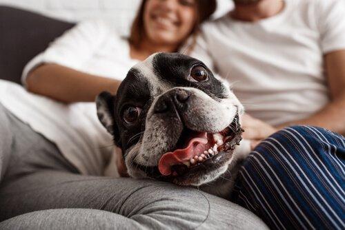 un cane felice seduto tra i suoi padroni
