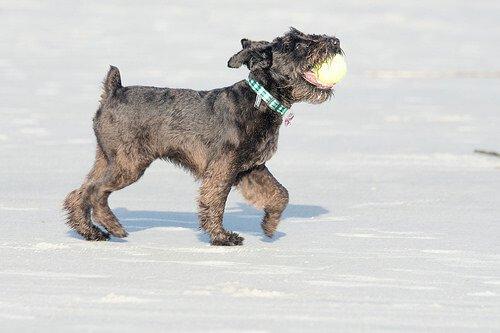Arriva l'inverno: divertitevi sulla neve con il vostro cane