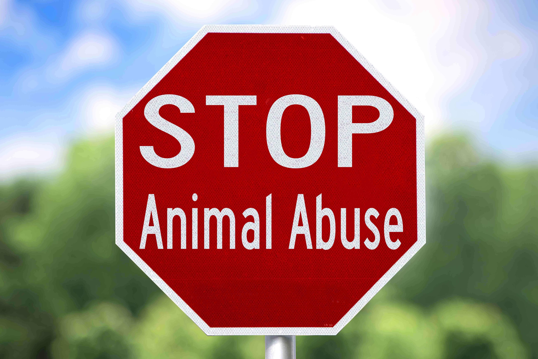 un cartello contro gli abusi sugli animali