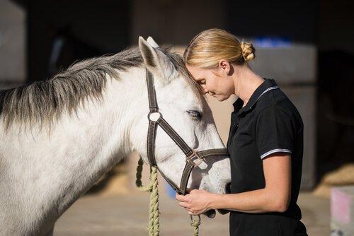 un cavallo bianco appoggia la testa sulla fronte della padrona