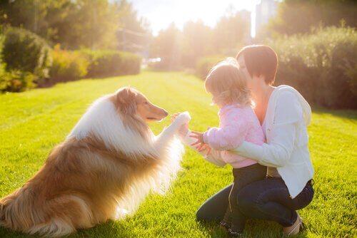 Come funziona la psicoterapia con cani e gatti?