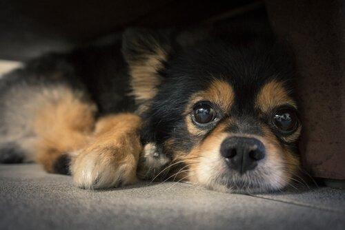 A cosa servono i baffi dei cani?