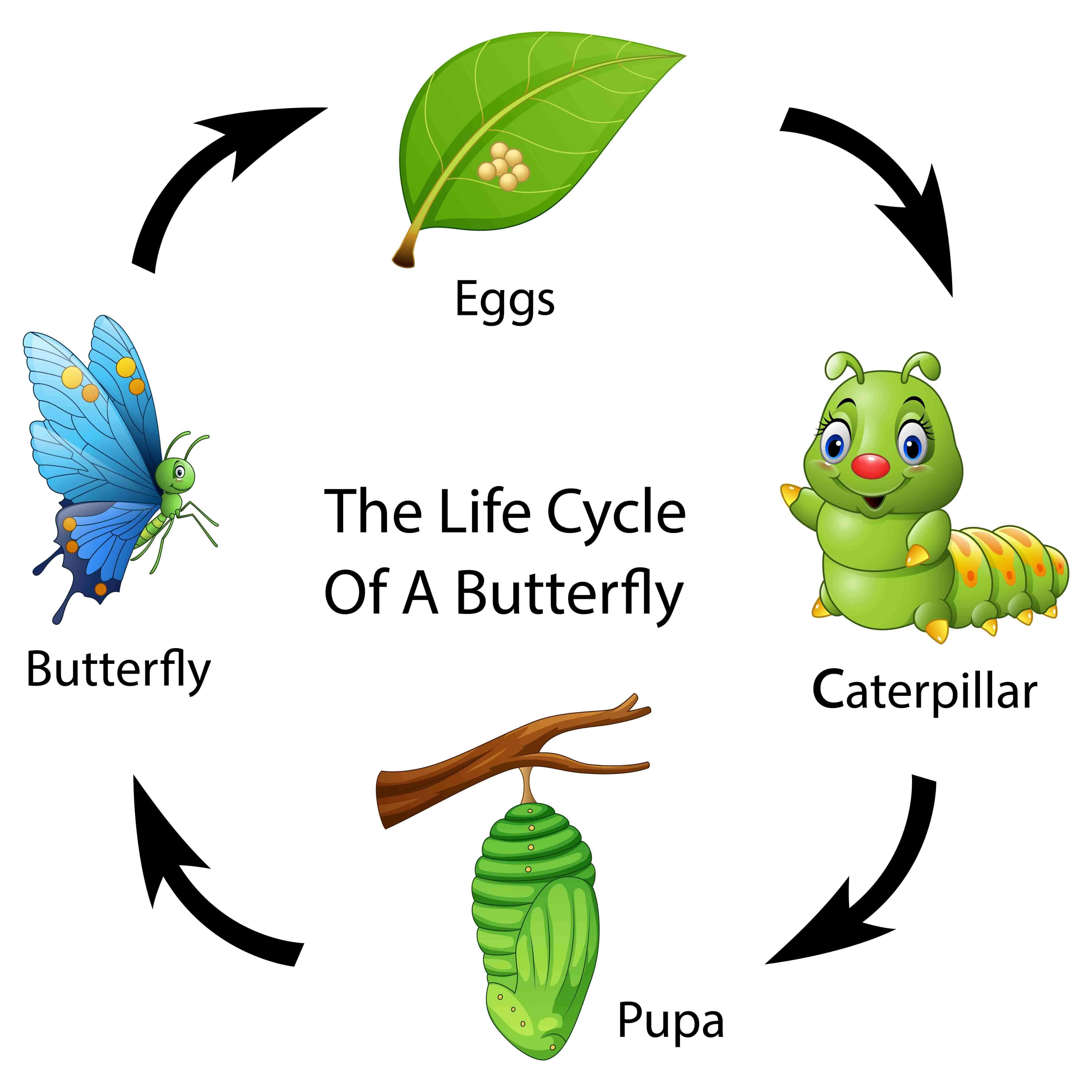 un disegno con il ritmo circadiano degli insetti