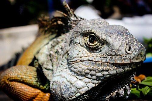 La fauna selvatica della Foresta amazzonica