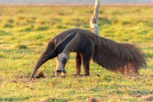 Animali che vivono nella Foresta Pluviale