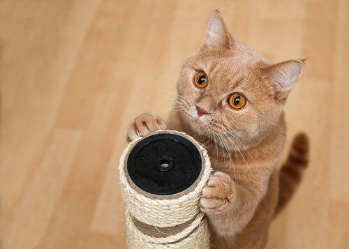un gattino si fa le unghie in piedi su un tiragraffi
