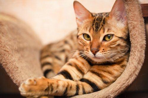 gatto tigrato seduto su tappeto
