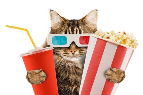 un gatto con occhiali 3D con bibita e popcorn