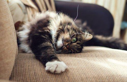 un gatto disteso sul divano si guarda la zampina