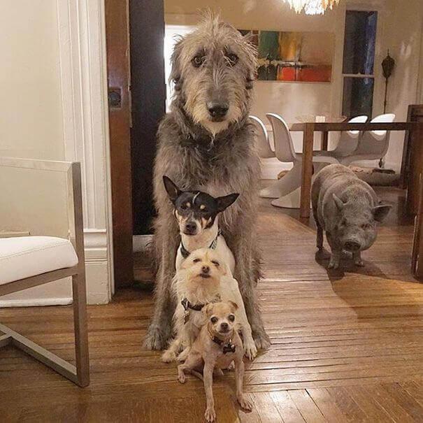 un gruppo di cani domestici in un salone in fila