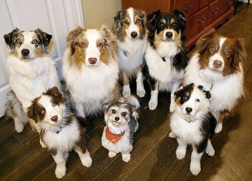 I cani possono essere clonati?