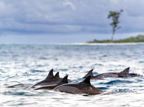 un gruppo di delfini nuota nel mare