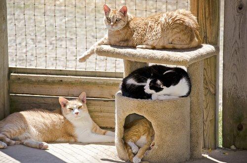 un gruppo di gatti in un rifugio su un tiragraffi