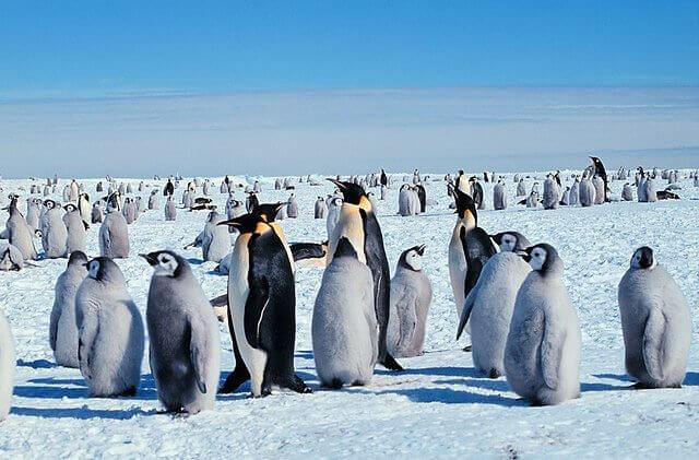 un gruppo di pinguini dell'antartide al sole