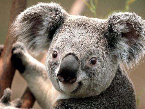 7 animali più pacifici del mondo